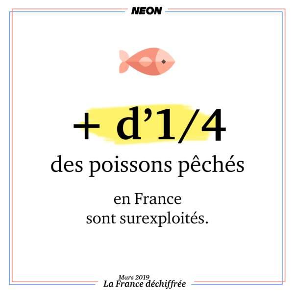 + d'1/4 des poissons pêchés en France sont surexploités