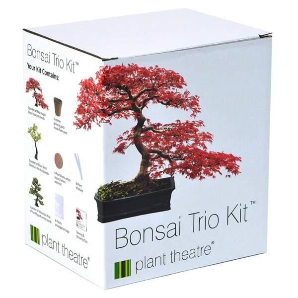 Un kit pour faire pousser des bonsaïs