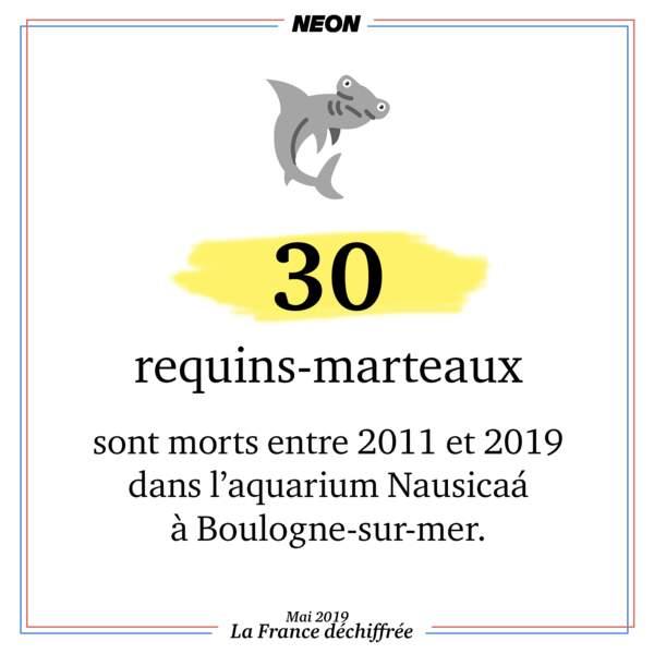 30 requins-marteaux sont morts entre 2011 et 2019 dans l'aquarium Nausicaá de Boulogne-sur-mer