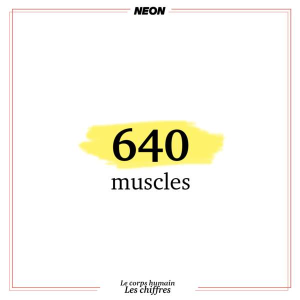 640 muscles