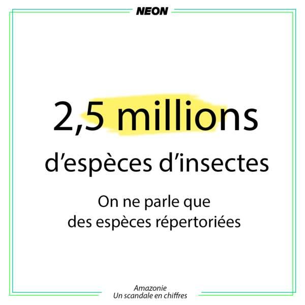 2,5 millions d'espèces d'insectes