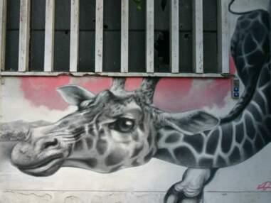 Street Zoo