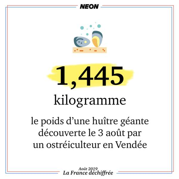 1,445 kg : le poids d'une huître géante découverte le 3 août par un ostréiculteur en Vendée