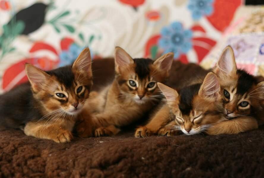 En Islande, une télé-réalité suit la vie de quatre chats