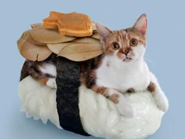 Sushi Cats : Un raz-de-marée de mauvais goût menace le monde entier