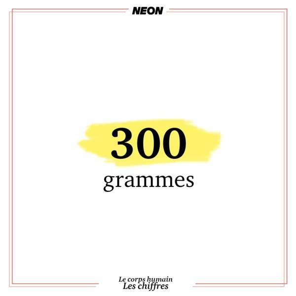 300 grammes : c'est le poids du coeur