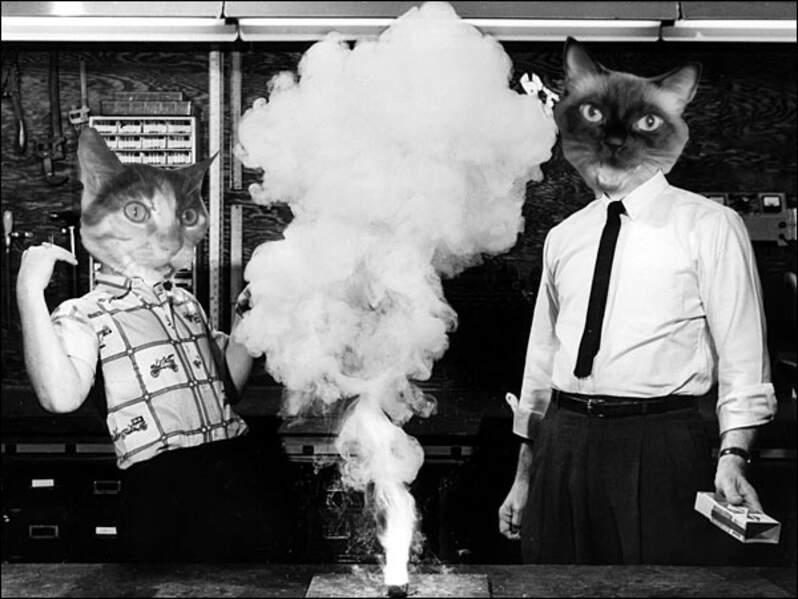 "Extrait du tumblr ""Cat scientists of the 1960s"""