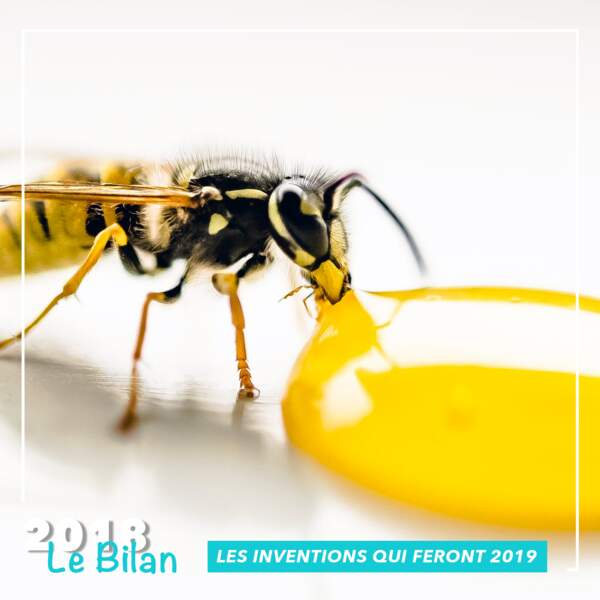 Le vaccin pour les abeilles