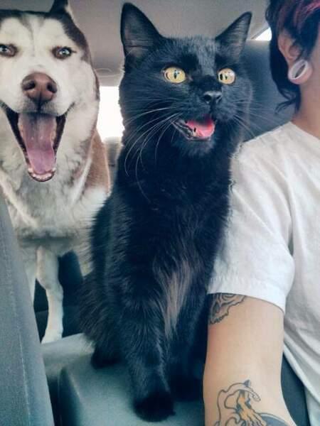 Chiens et chats aiment se balader en voiture