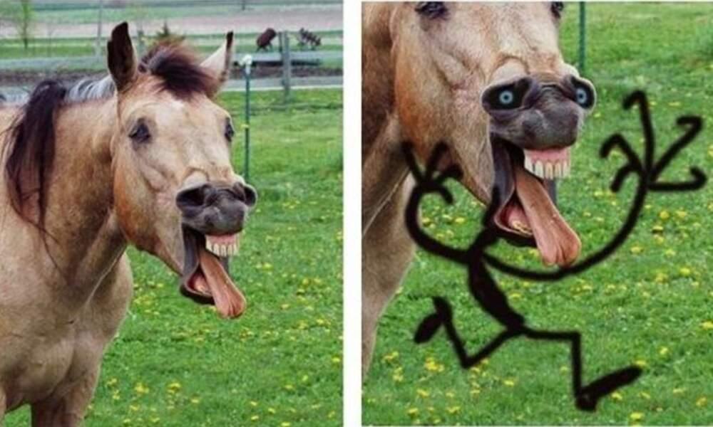 Le cri du cheval