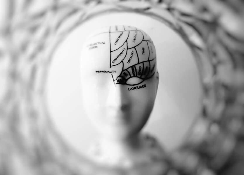 12 • Une diminution de la masse cérébrale