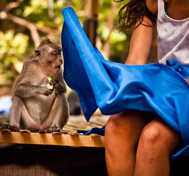 Le singe qui en avait trop vu...