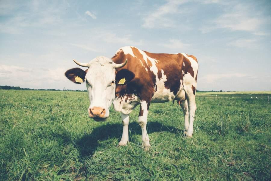 Agriculture : des rendements moins importants