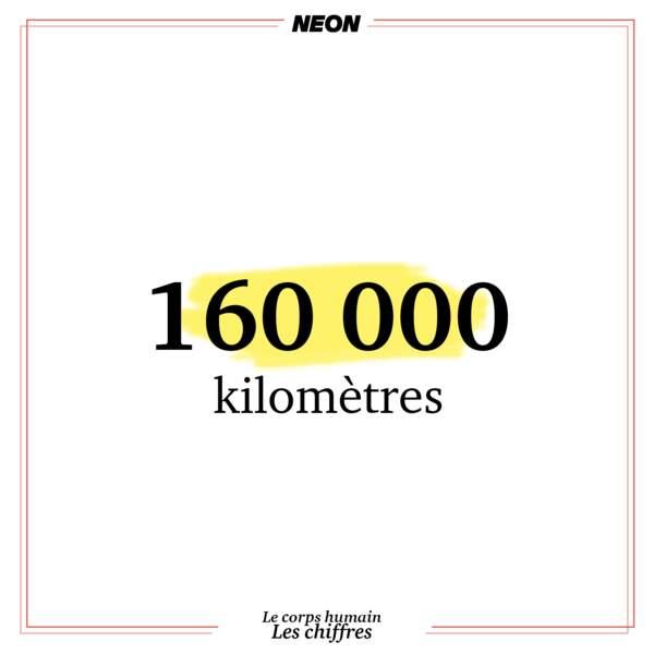 160 000 kilomètres de vaisseaux sanguins dans un corps humain