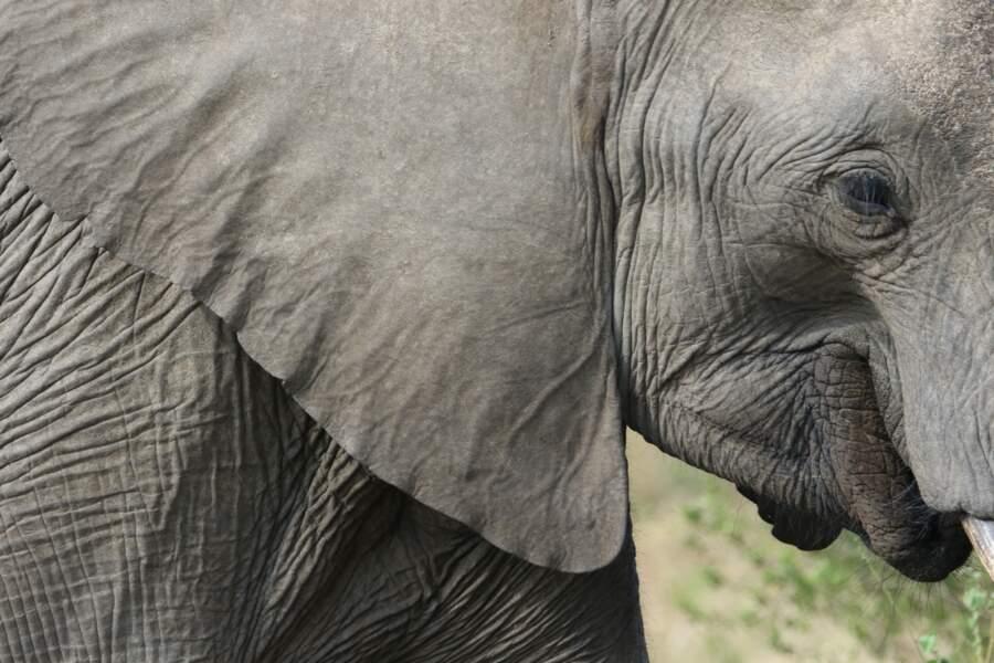 Les éléphants sont interdits sur la plage de Granville