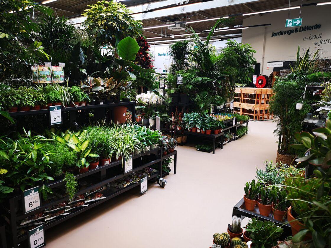 On vous fait visiter le nouveau magasin Truffaut à Paris, adapté aux jardiniers urbains