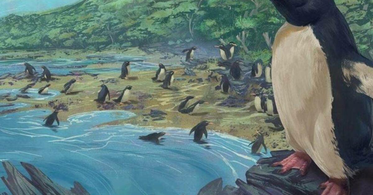 L'ancêtre de tous les pingouins aurait vécu sur le 8ème continent perdu de la Terre