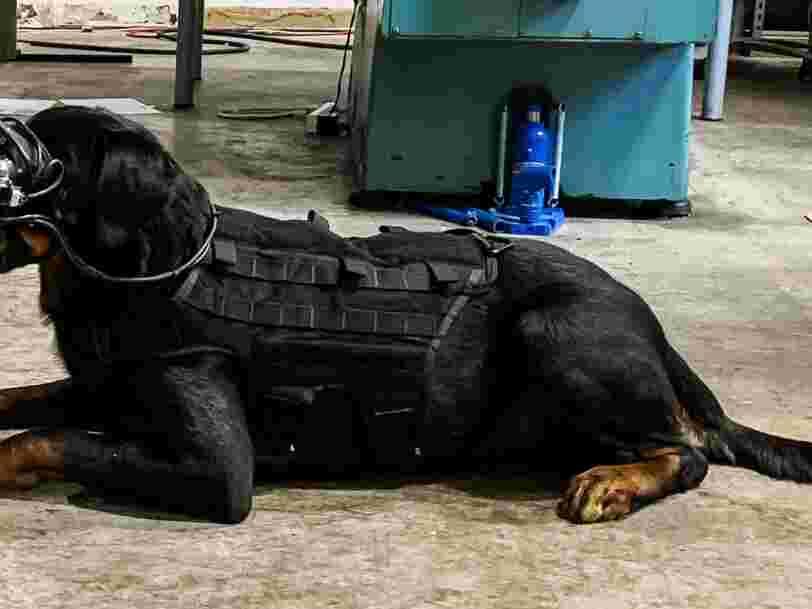 L'armée américaine veut expérimenter des lunettes de réalité augmentée sur des chiens de combat