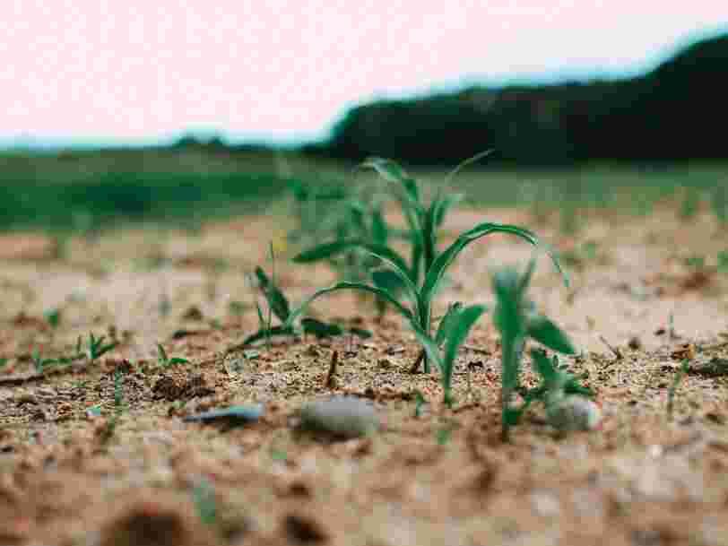 Une centaine d'OGM sont autorisés en France, y compris dans l'alimentation humaine