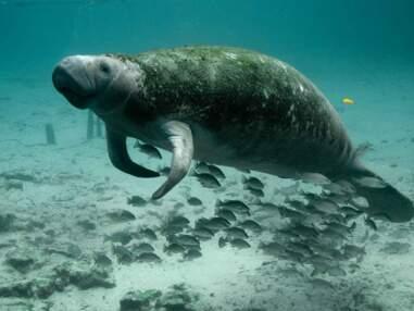 Ces animaux autant à l'aise sur terre que sous l'eau