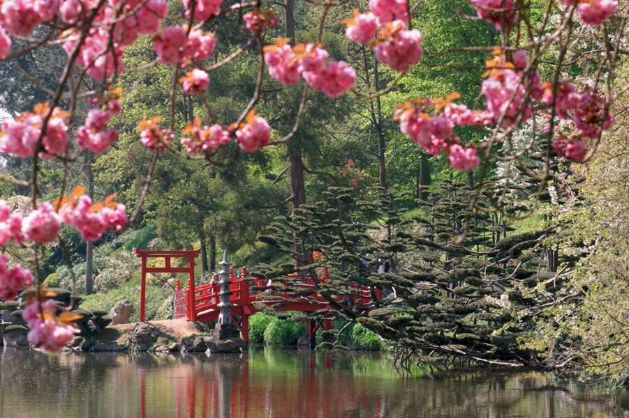 Cholet vs Kyoto : jardin zen