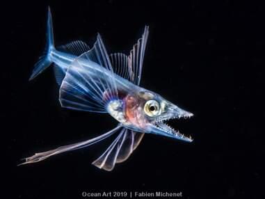 Les plus belles photos du concours Ocean Art Underwater