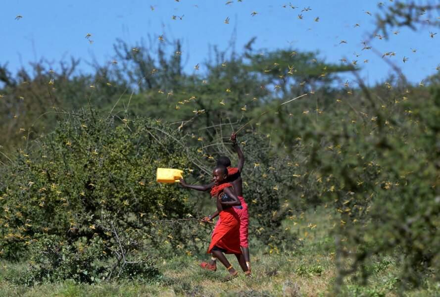 Les populations tentent de les arrêter par des moyens artisanaux mais rien n'y fait.