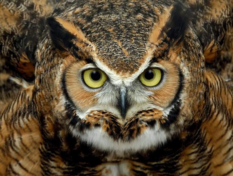 Des yeux immenses