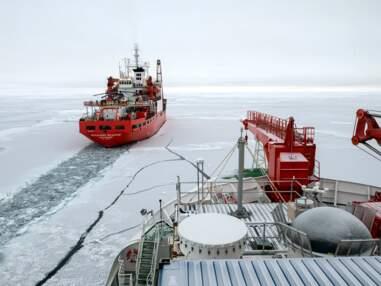 Réchauffement climatique : zoom sur l'expédition Mosaic en Arctique