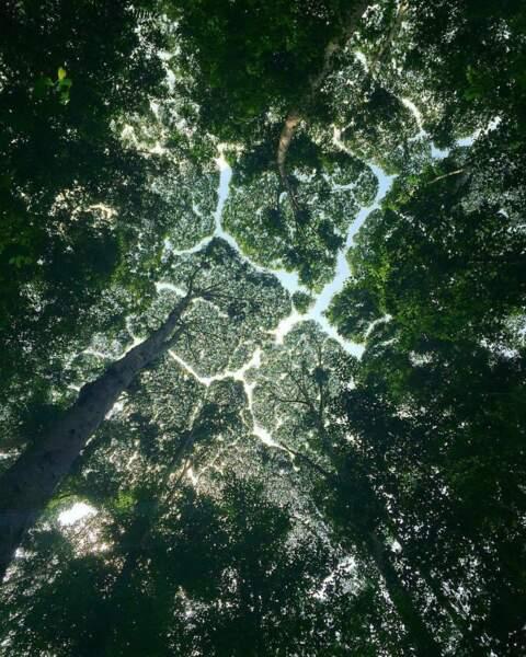 Timides au sommet, les arbres le sont aussi à la base...
