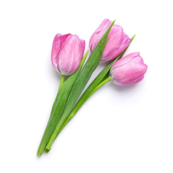 La reine Juliana le dit avec des fleurs