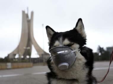 Les masques les plus originaux à travers le monde