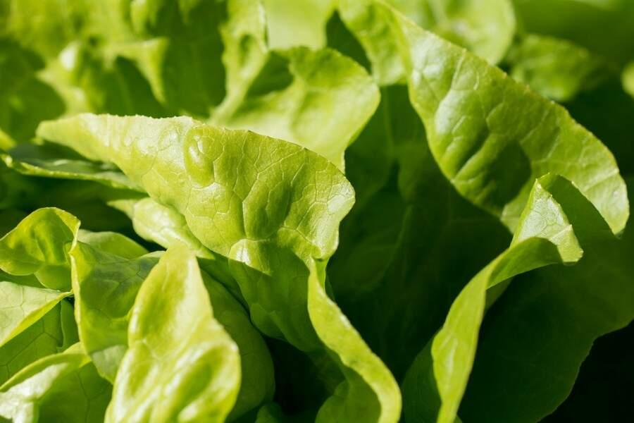 La salade...