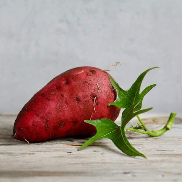 La patate douce limite les herbes indésirables