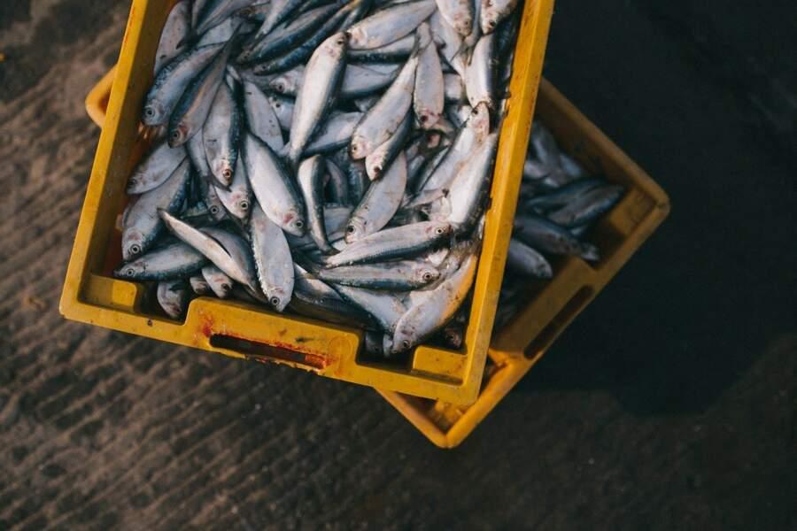 3/ Étang de Thau : poissons en circuit court