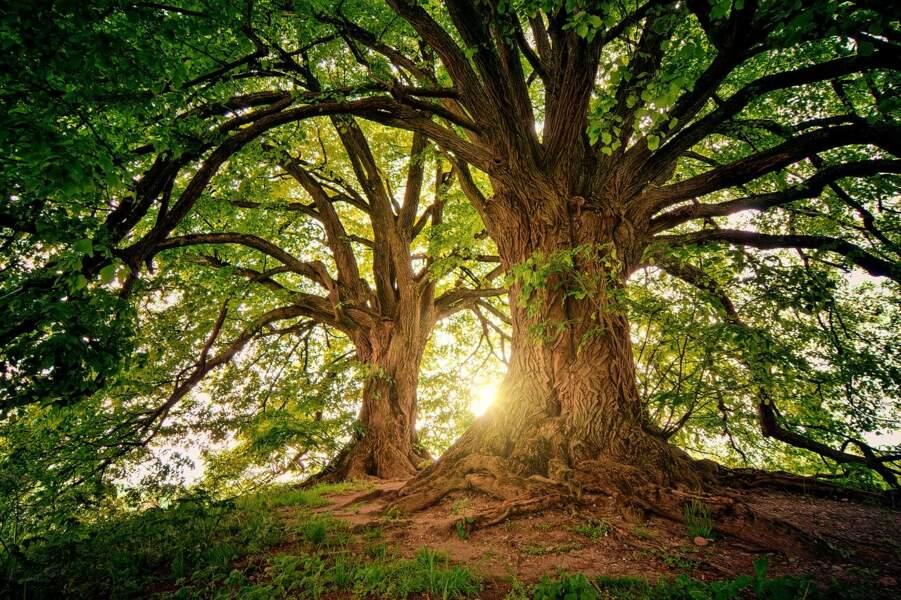 Horizon 2030, planète : élucider le secret du génie des plantes