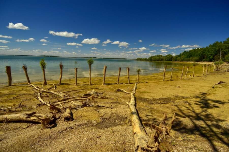 La réserve nationale de chasse et de faune sauvage du lac du Der, Marne et Haute-Marne