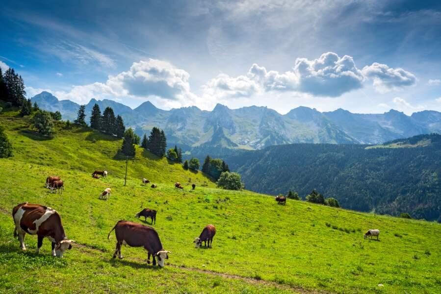 Les ruminants valorisent des terres non cultivables