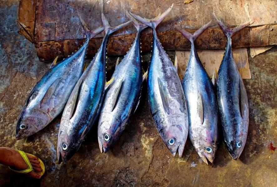 Senne sur dispositif de concentration de poissons (DCP) (technique moins durable)