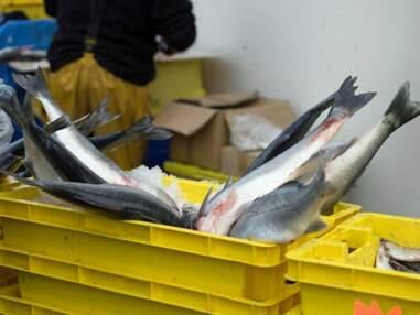 8 méthodes de pêche au banc d'essai
