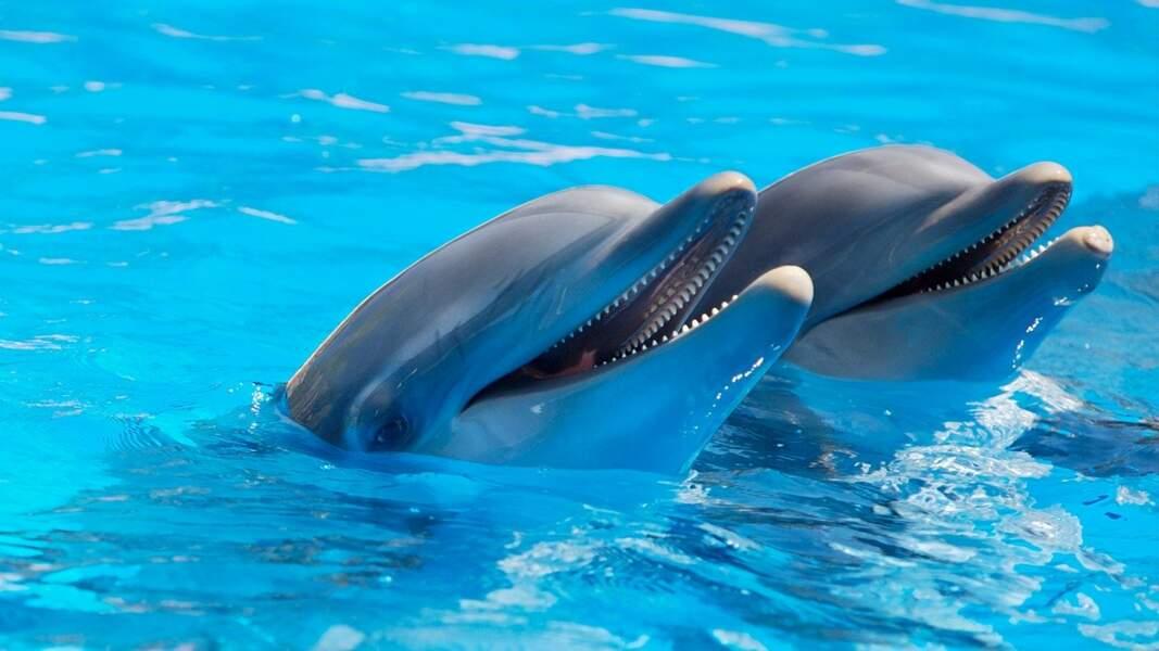 Les dauphins s'appellent par leur nom