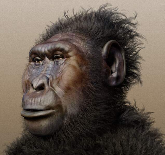 Paranthropus Bosei