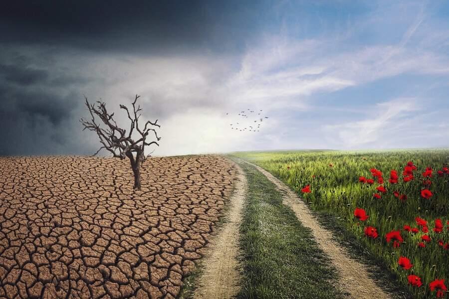 34 % Les changements climatiques et la surpopulation
