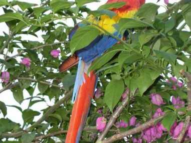 Les oiseaux les plus colorés dumonde