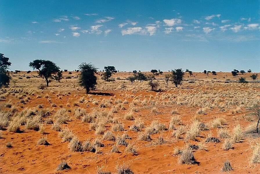 Désert de Kalahari- 900 000 km²