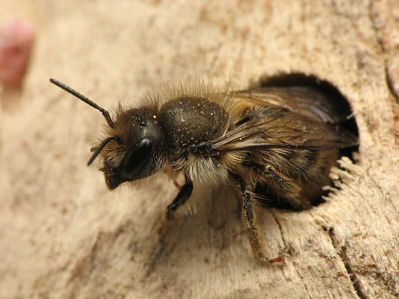 L'abeille, championne de surf