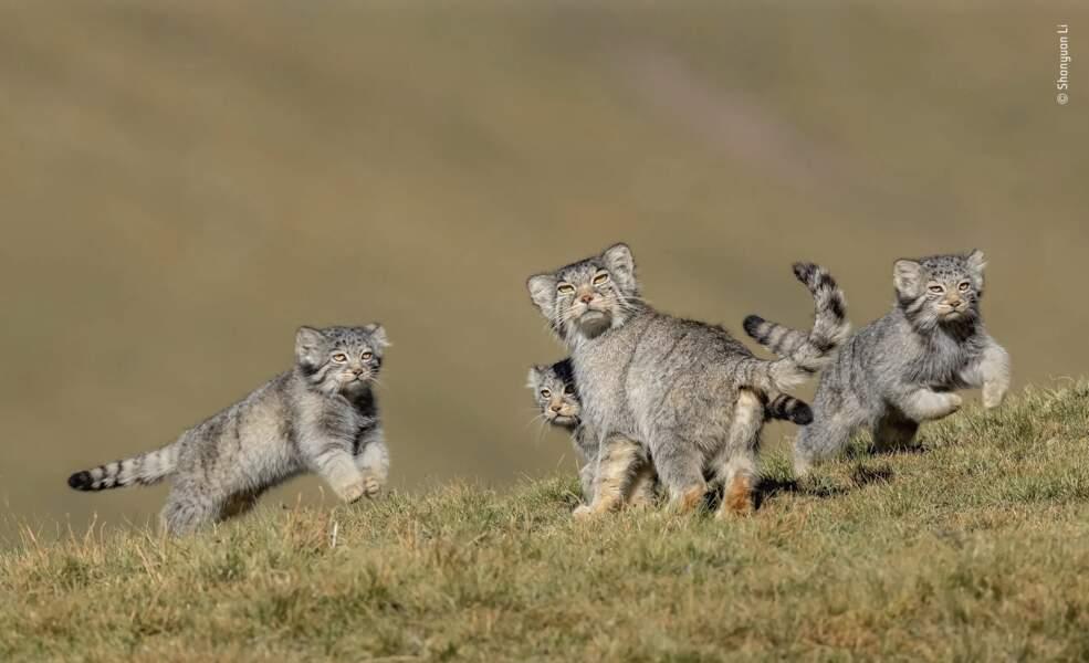 """La photo gagnante de la catégorie : """"Comportement : mammifères"""""""