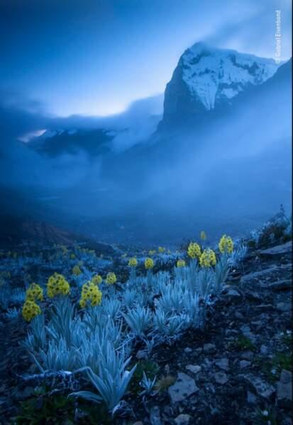 """La photo gagnante de la catégorie : """"Plantes et champignons"""""""