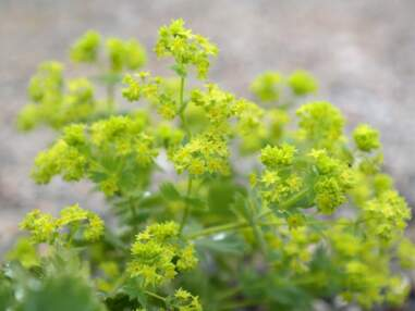 Les meilleures plantes à cueillir dans la nature et à déguster