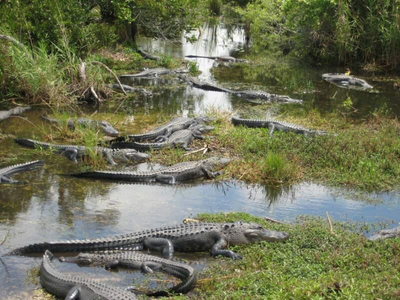 N°5 : Les crocodiles, scorpions et rats